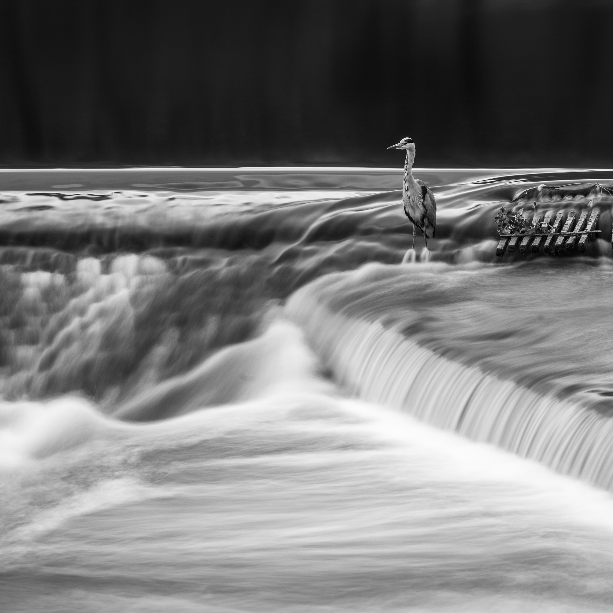 Chester Photographer Salmon Leap